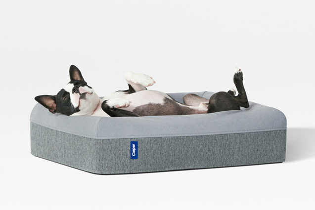 Example of dog bed by Casper